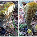 champignon non identifié