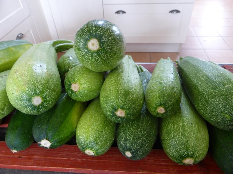 8-courgettes (1)