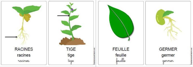vocabulaire du jardin 6