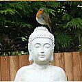 Titi & le bouddha