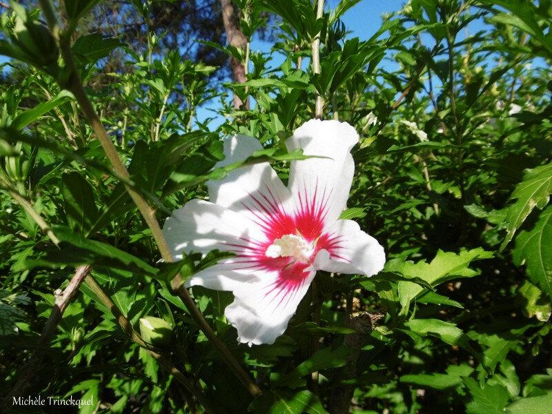 1-Lever de soleil et Fleurs de Léon 140719