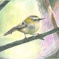 Bird being