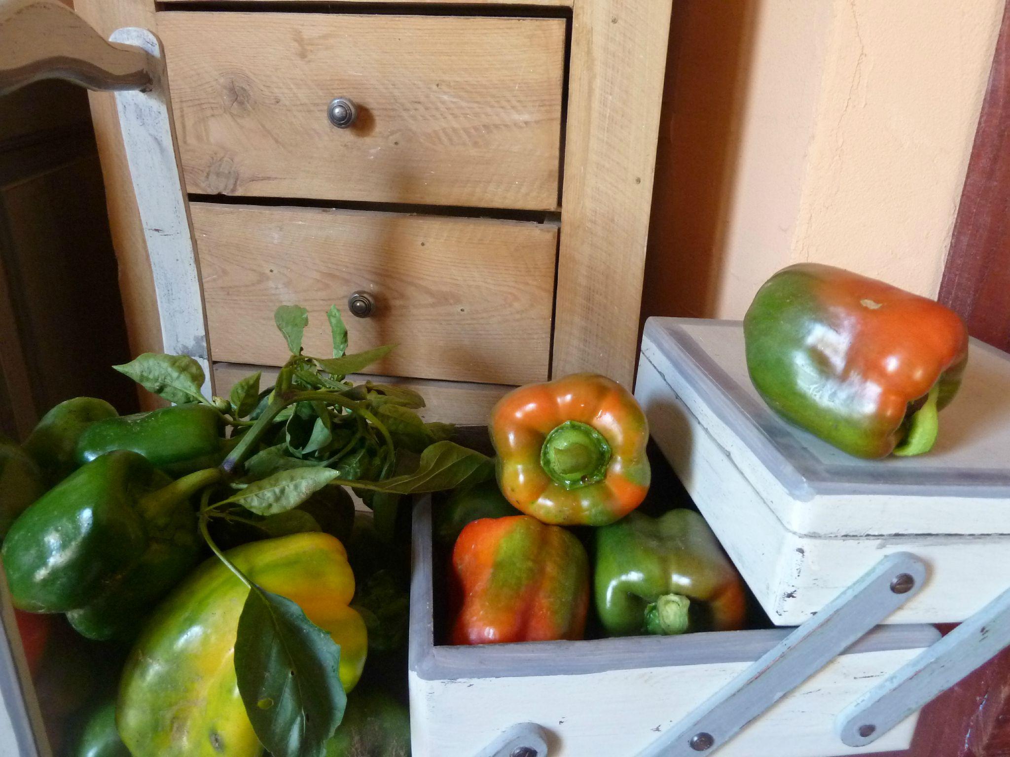 poivrons verts - www.passionpotager.canalblog.com