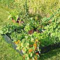 Que planter et semer dans un potager en lasagnes ?
