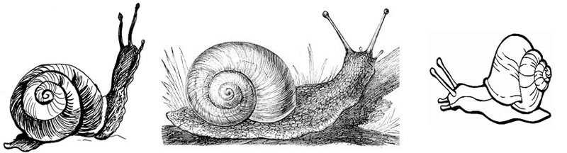 coloriage-escargot-114-horz