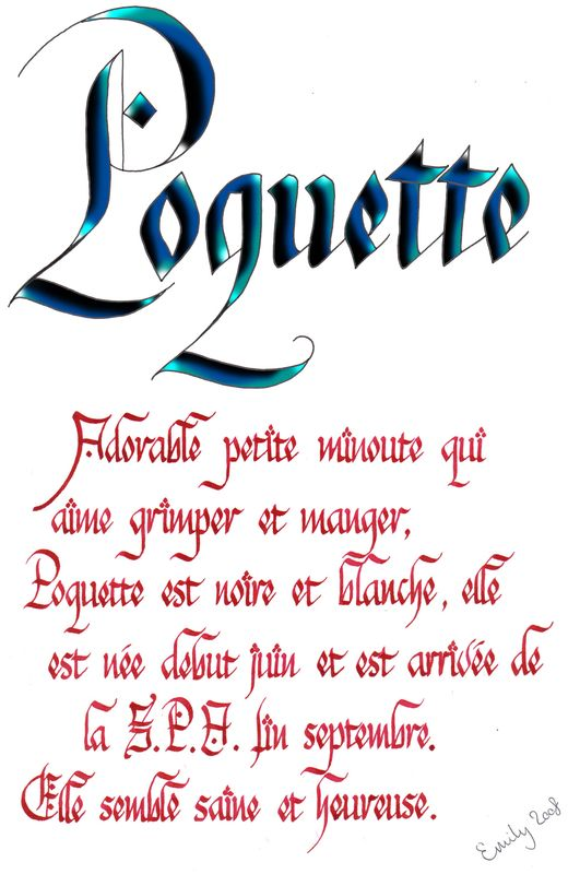 Poquette