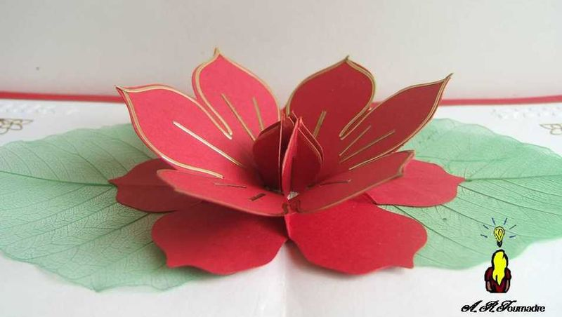 Carte Pop Up Lucido Une Fleur Rouge Extraordianaire Les Passions