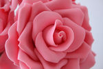 img_rose_close_up