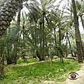 Ville oasis d'Al Aïn