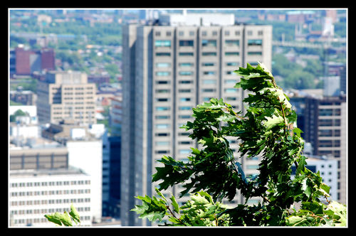 2008-07-05 - Montreal 035