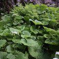 2009 06 24 Végétation au bord d'un ruisseau au Mont Dore (2)