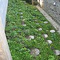 Evolution de la fraiseraie chez emmanuel rolland