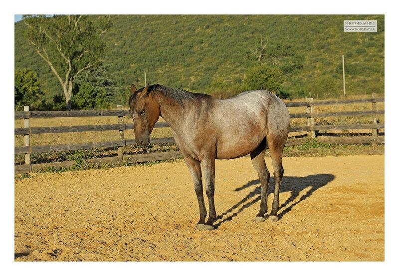 hotos JMP©Koufra 12 - El Rancho - Le Mas de Sisco - 25082020 - 0670