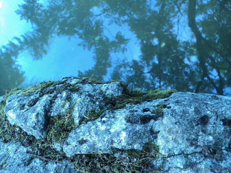75 15082015-reflets arbres