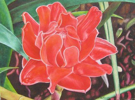 Rose de porcelaine
