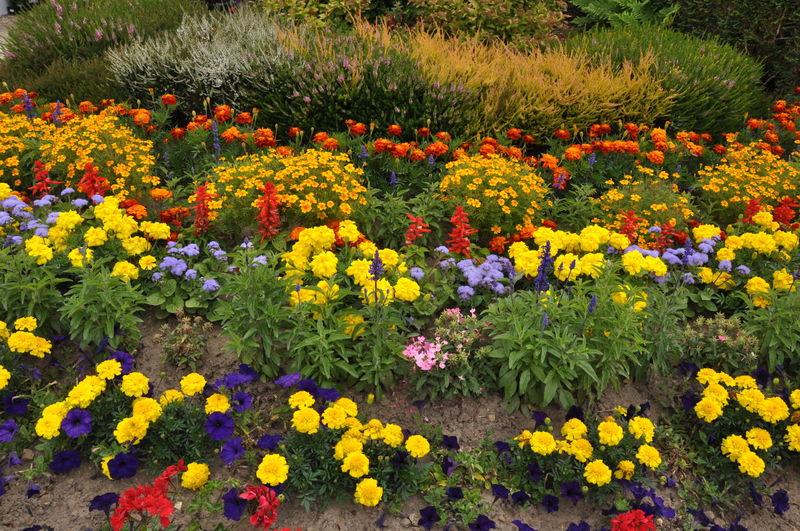 jardins fleuris 0410042