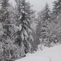 Première neige ... première rando raquettes !
