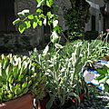 1er troc aux plantes