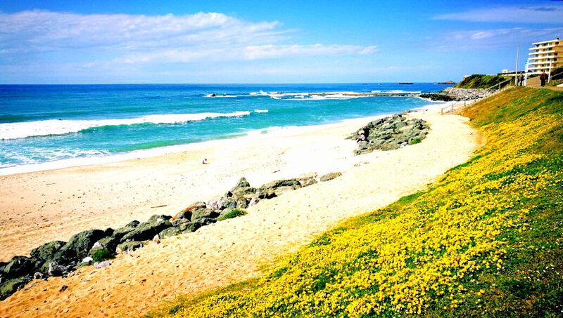 Biarritz, plage Milady, fleurs hyperfiltres (64)
