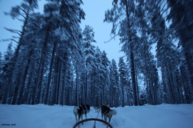 traineau sous la forêt de pins