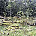 Chemin de la Mâture vers le Plateau du Cournau...