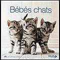Bébés chats - rita mabel schiavo - editions solar