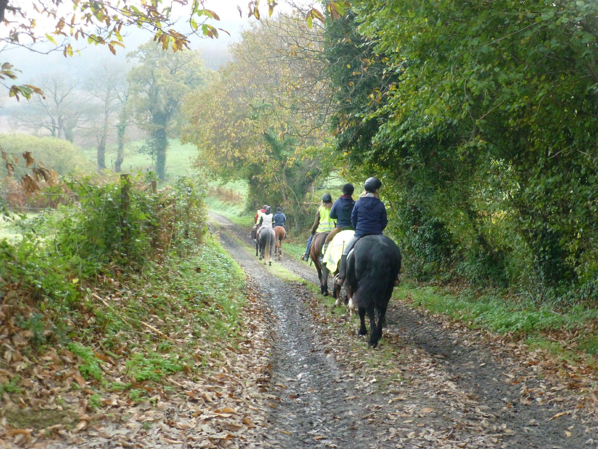 balade liberté à saint brice - cheval nature (12)