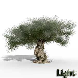 Olea europaea olive tree 3D light tree plant model TPF The Plant Factory Icon