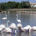 Flamants roses 01