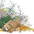 jean de l'ourse
