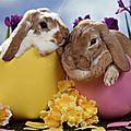 Bonnes fêtes de pâques a toutes et tous