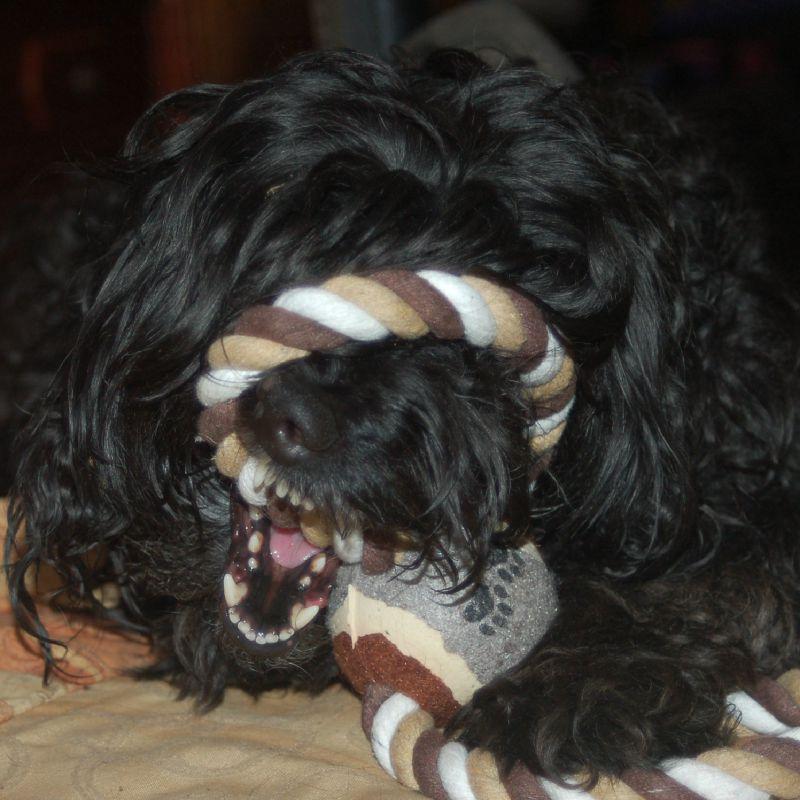 13/03/2012 avec son nouveau jouet offert par Lilie