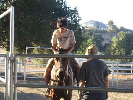horsetaylor
