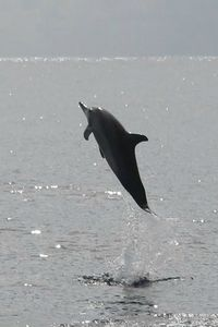 Dauphins (2)
