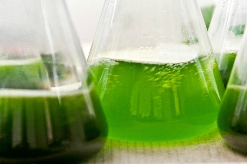 algues-biocarburant
