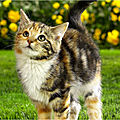 chat Wallpaper-iphone-various-226