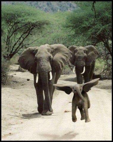 elephants et elephanteau heureux