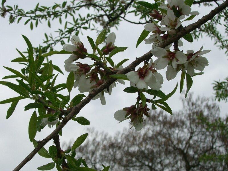 Jardin 29 Mars 2014 019