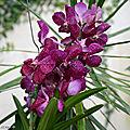 Des orchidées dans la serre aux papillons du parc floral d'orléans