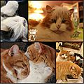 WindowsLiveWriter/Lanne2013senestalle_DA2D/CHATS FETES_thumb_2