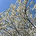 Réjouissances du printemps #6