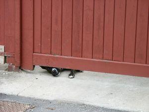Pépère sous la porte