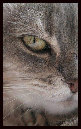 eye_tiger