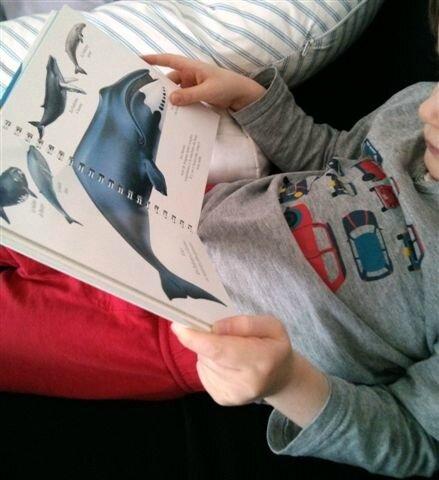 La baleine ©Kid Friendly