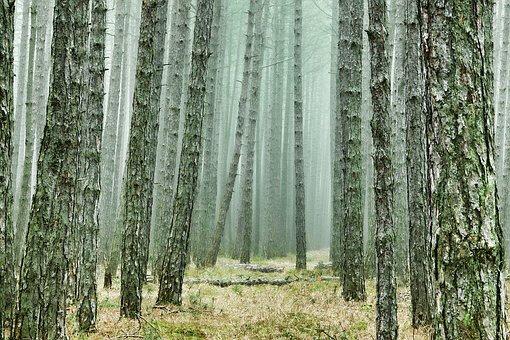wood-3107139__340