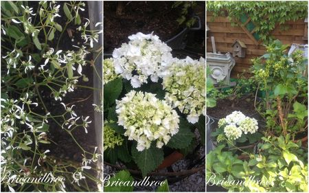 cols et fleurs blanches