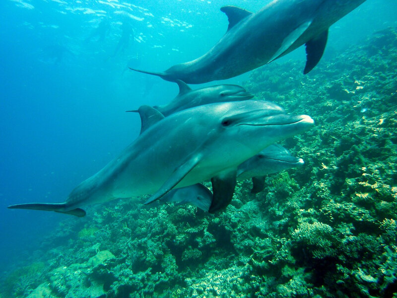 dolphins-378217_960_720