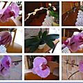 9 photos orchidées