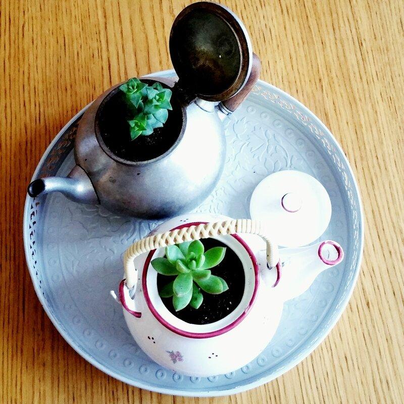 plantes-succulentes-déco-tea-time