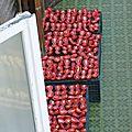Tomates au soleil